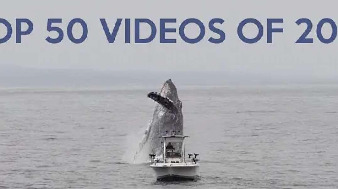 Top 50 Best Viral Videos of 2019